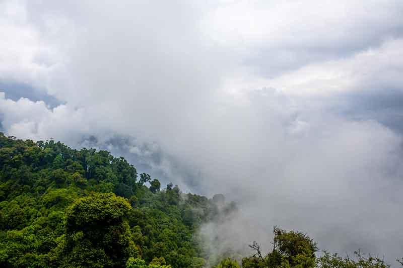 louds enveloping a wooded slope in Ravangla