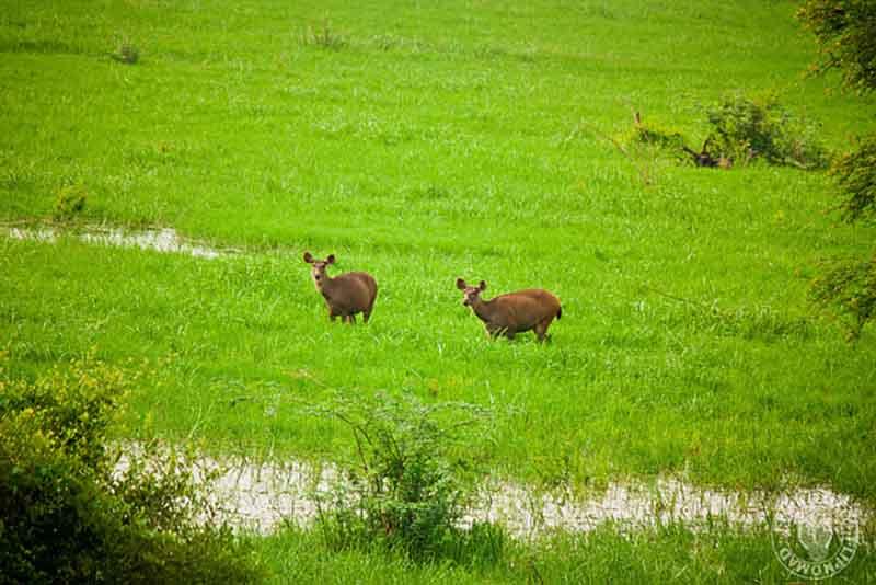 Keoladeo National Park- Best Bird Sanctuary in India