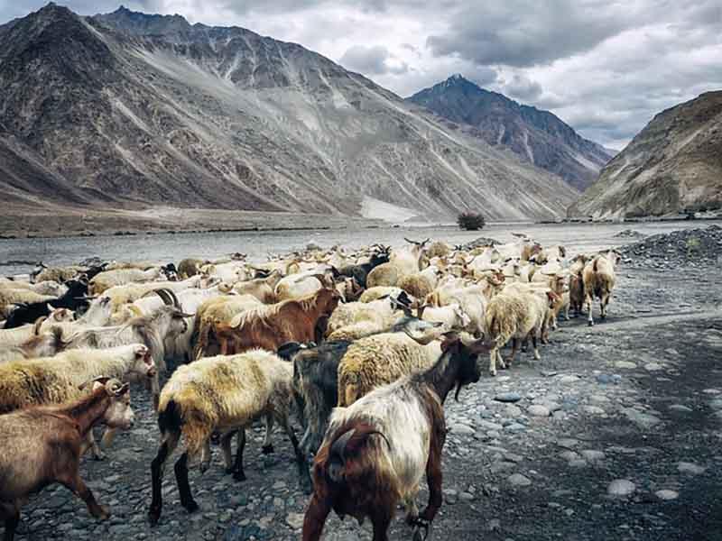 Nubra Valley north east of Ladakh valley