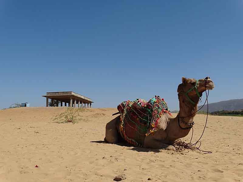 Pushkar Camel Mela