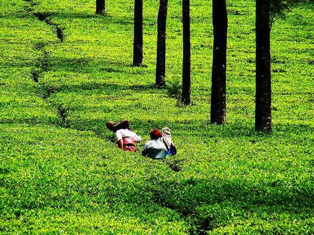 Tea tourism, Assam