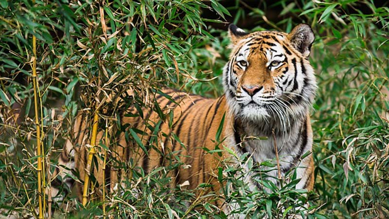 JIm Corbett National Park Tiger Reserve
