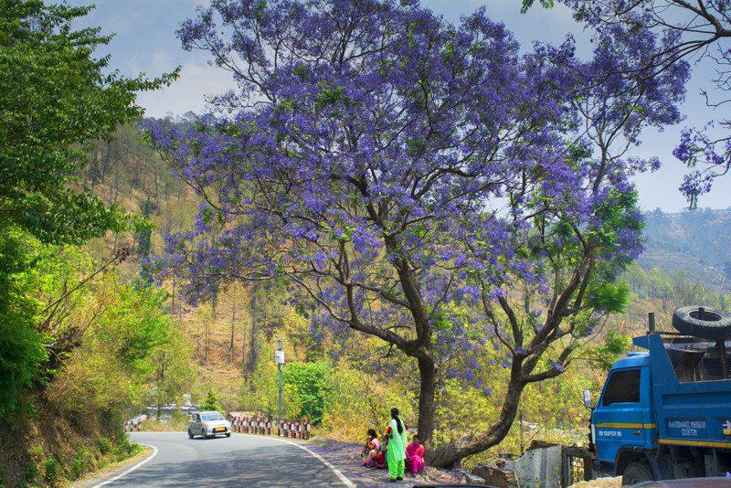 Road to Kainchi Dham Neem Karoli Baba