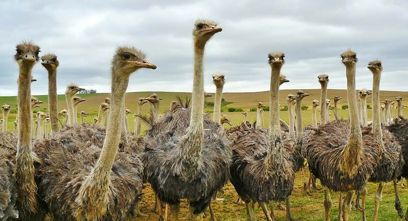 Ostriches were found in India-Interesting facts about indian geography