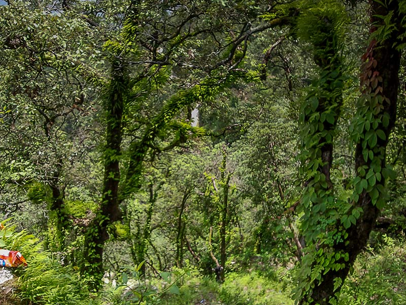 Jungle walk in Lansdowne