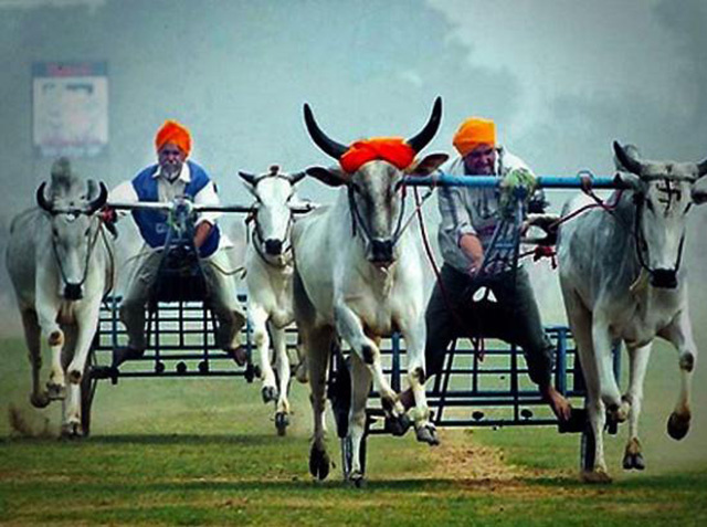 Watch the Rural Olympics at Kila Raipur
