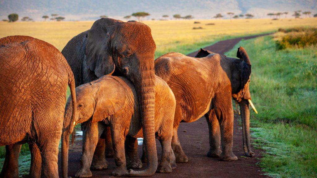 Admitting captive elephants