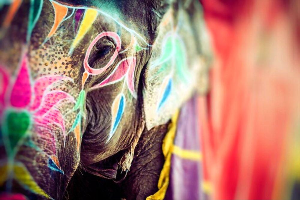 Jaipur, Rajasthan Holi and Elephants