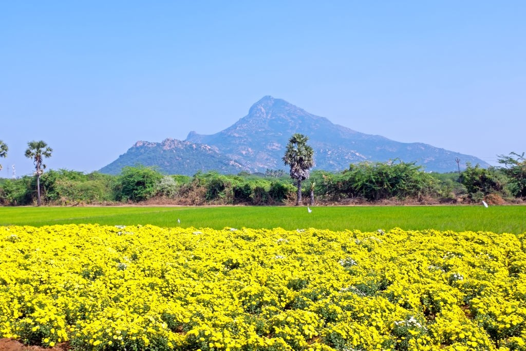 Tiruvannamalai, Tamil Nadu