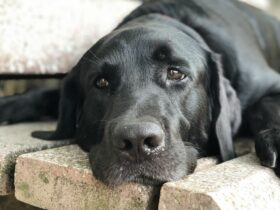 An act of extreme brutality at Kerala's Adimalathura beach created a huge outrage in the country. Three youngsters, who may be minors -- allegedly thrashed Bruno, a black labrador, to death for sleeping under a boat